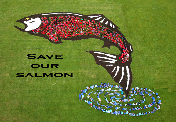 save our salmon